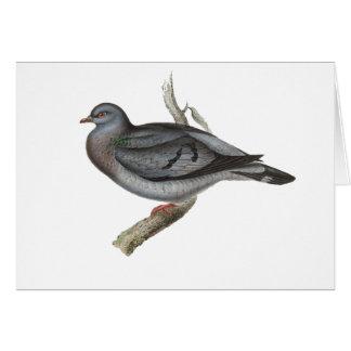 Stock Dove Card