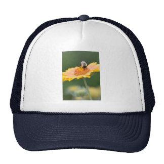 stock up mesh hat