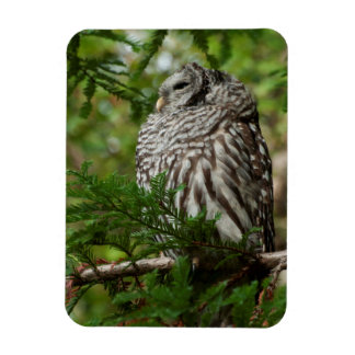 Stoic Barred Owl Magnet