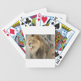 Stoic Lion Looking Off into the Distance Bicycle Playing Cards