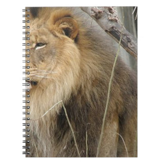 Stoic Lion Looking Off into the Distance Notebooks