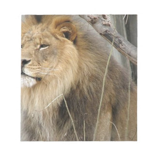 Stoic Lion Looking Off into the Distance Notepad