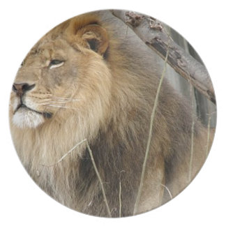 Stoic Lion Looking Off into the Distance Plate