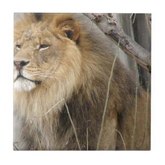 Stoic Lion Looking Off into the Distance Small Square Tile
