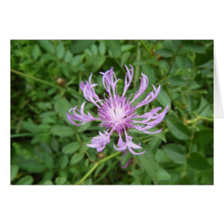 Stokes Aster Greeting Card