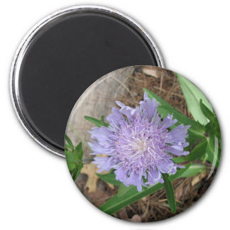 Stokes Aster, Stokesia laevis 6 Cm Round Magnet