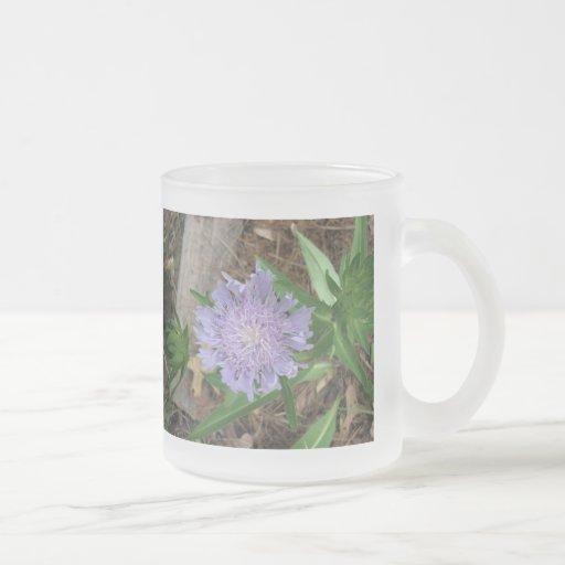 Stokes Aster, Stokesia laevis Mug