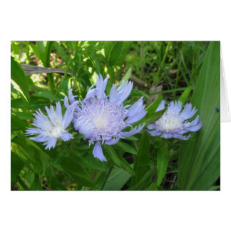 Stokesia, Stokes Aster Greeting Card