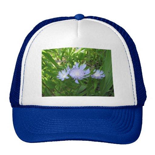 Stokesia, Stokes Aster Trucker Hat