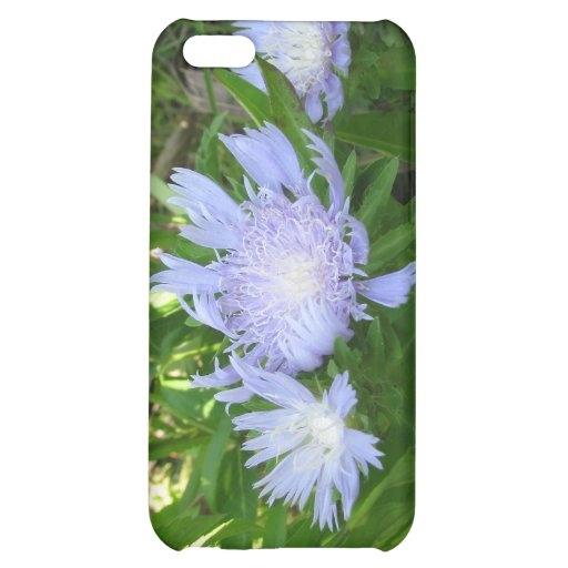 Stokesia, Stokes Aster iPhone 5C Cover