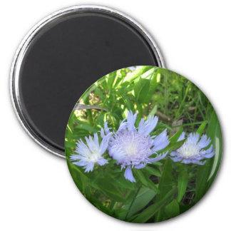 Stokesia, Stokes Aster 6 Cm Round Magnet