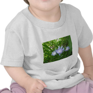 Stokesia Stokes Aster Tshirts