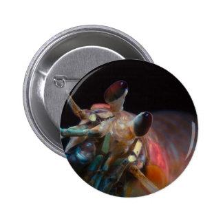 Stomatopod Mantis Shrimp Pin