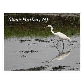 Stone Harbor Egret Postcard