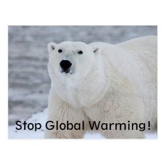 Stop Global Warming! Wild Polar Bear Postcard