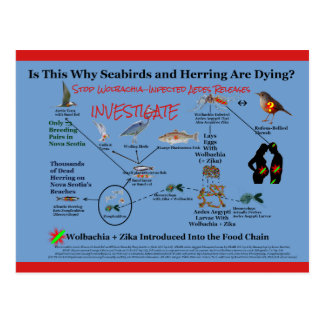 Stop Using Wolbachia and Investigate by RoseWrites Postcard