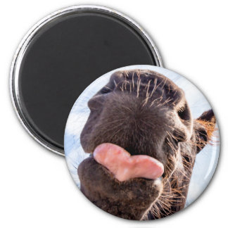 Straight from the Horse's Mouth Funny Horse Photo 6 Cm Round Magnet