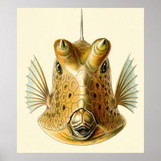 Strange Horned Fish Poster