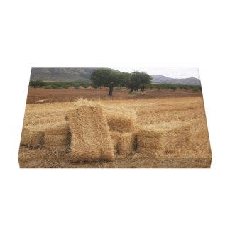 Straw Bales & Almond Trees Canvas Print