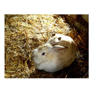 Straw Bunny Postcard