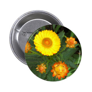 Straw Daisy Button