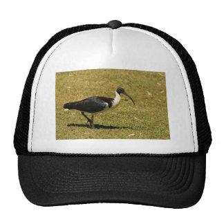 Straw-necked Ibis Cap