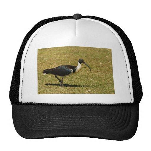 Straw-necked Ibis Mesh Hat