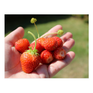 Strawberries on hand postcard