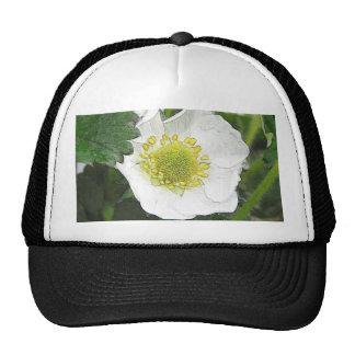 Strawberry Blossom Cap