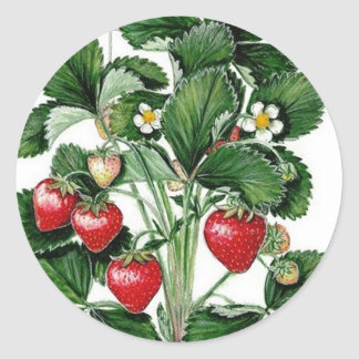 Strawberry Jam Jar Lid Label