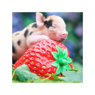 strawberry pig canvas print