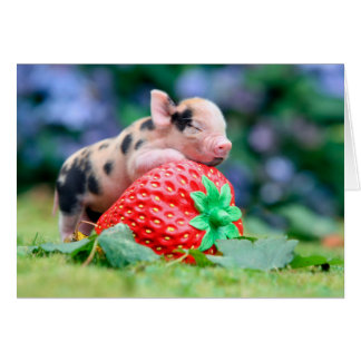 strawberry pig card