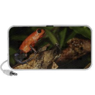 Strawberry Poison-dart frog (Dendrobates 2 iPhone Speakers