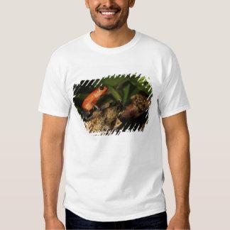 Strawberry Poison-dart frog (Dendrobates 2 Tee Shirt