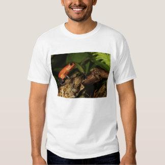 Strawberry Poison-dart frog (Dendrobates 2 Tshirts