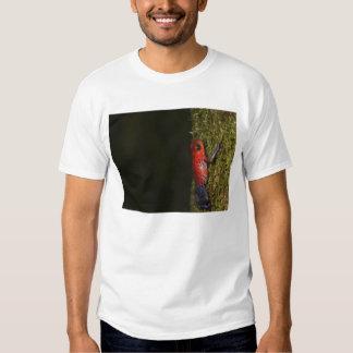 Strawberry Poison-dart frog (Dendrobates T-shirts