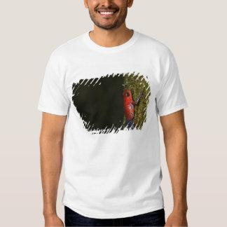 Strawberry Poison-dart frog (Dendrobates Tshirt
