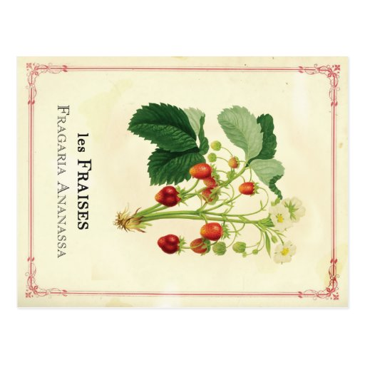 Strawberry Post Cards