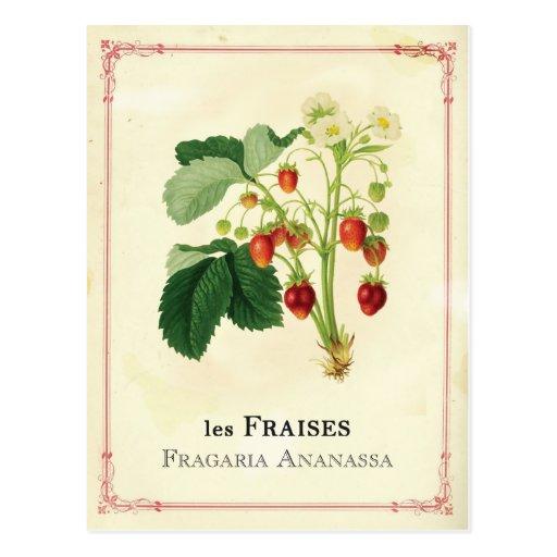Strawberry Postcards