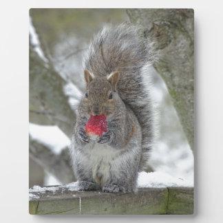 Strawberry squirrel plaque