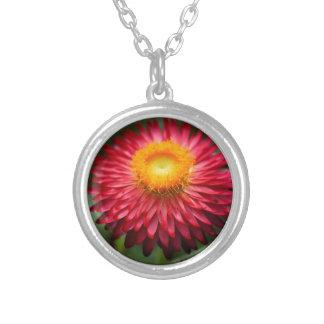Strawflower (Xerochrysum bracteatum) Silver Plated Necklace