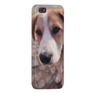 Stray dog case for the iPhone 5