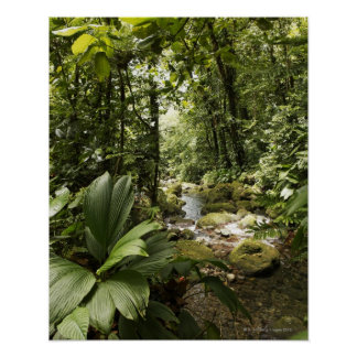 stream in rainforest, Dominica Posters
