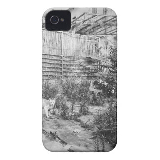 street cat iPhone 4 Case-Mate case