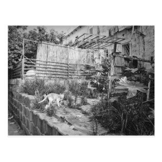 street cat postcard