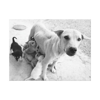 Street Dog Mum and Puppies Canvas Print