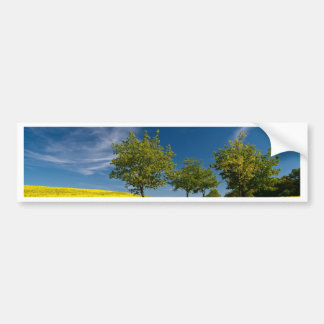 Street with trees and rape field bumper sticker