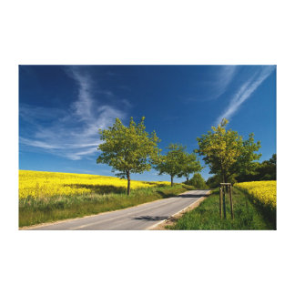 Street with trees and rape field gallery wrap canvas