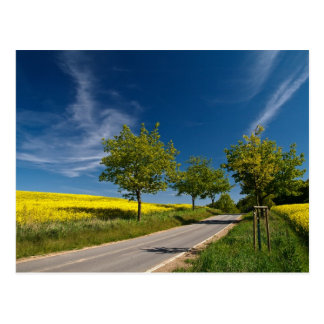 Street with trees and rape field postcard