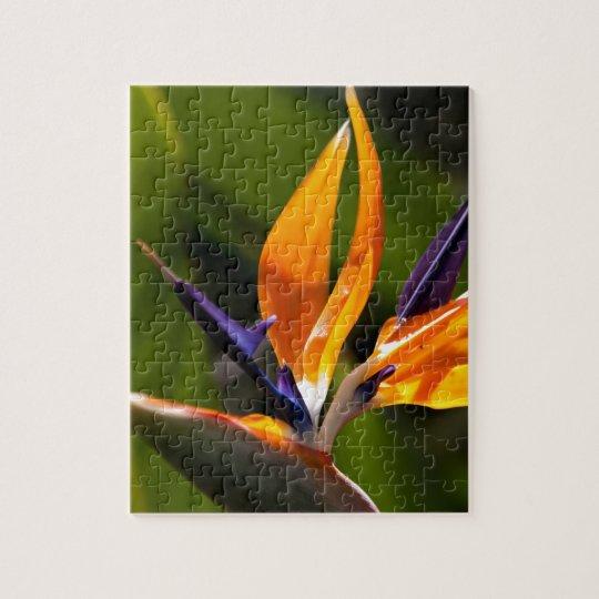 Strelitzia. Bird of paradise flower. Jigsaw Puzzle